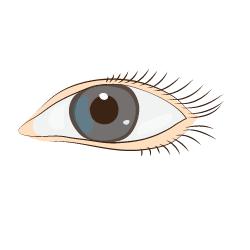 Auge mit grauer Iris und Wimpern
