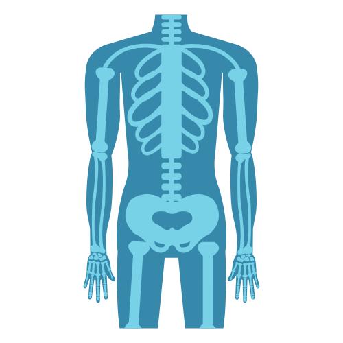 Skelett in blau